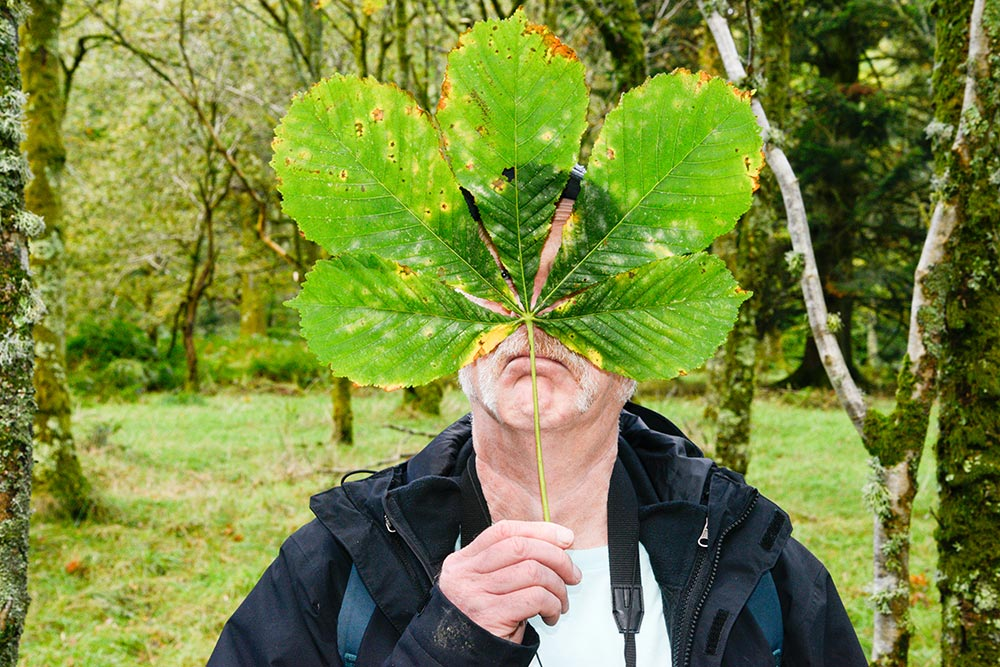 Man with Sycamore leaf