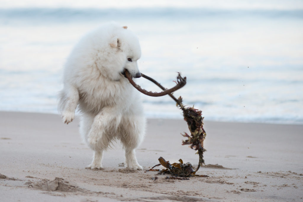 Dog with seaweed