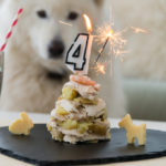 Dog with birthday meal