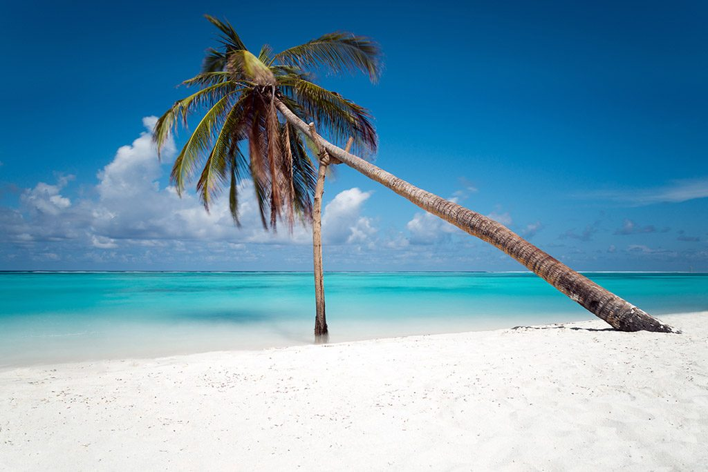Palm tree, Maldives, Indian ocean