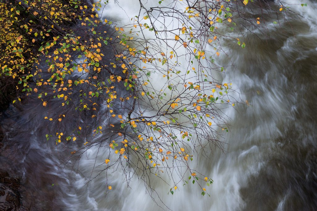 autumn leaves over river etive